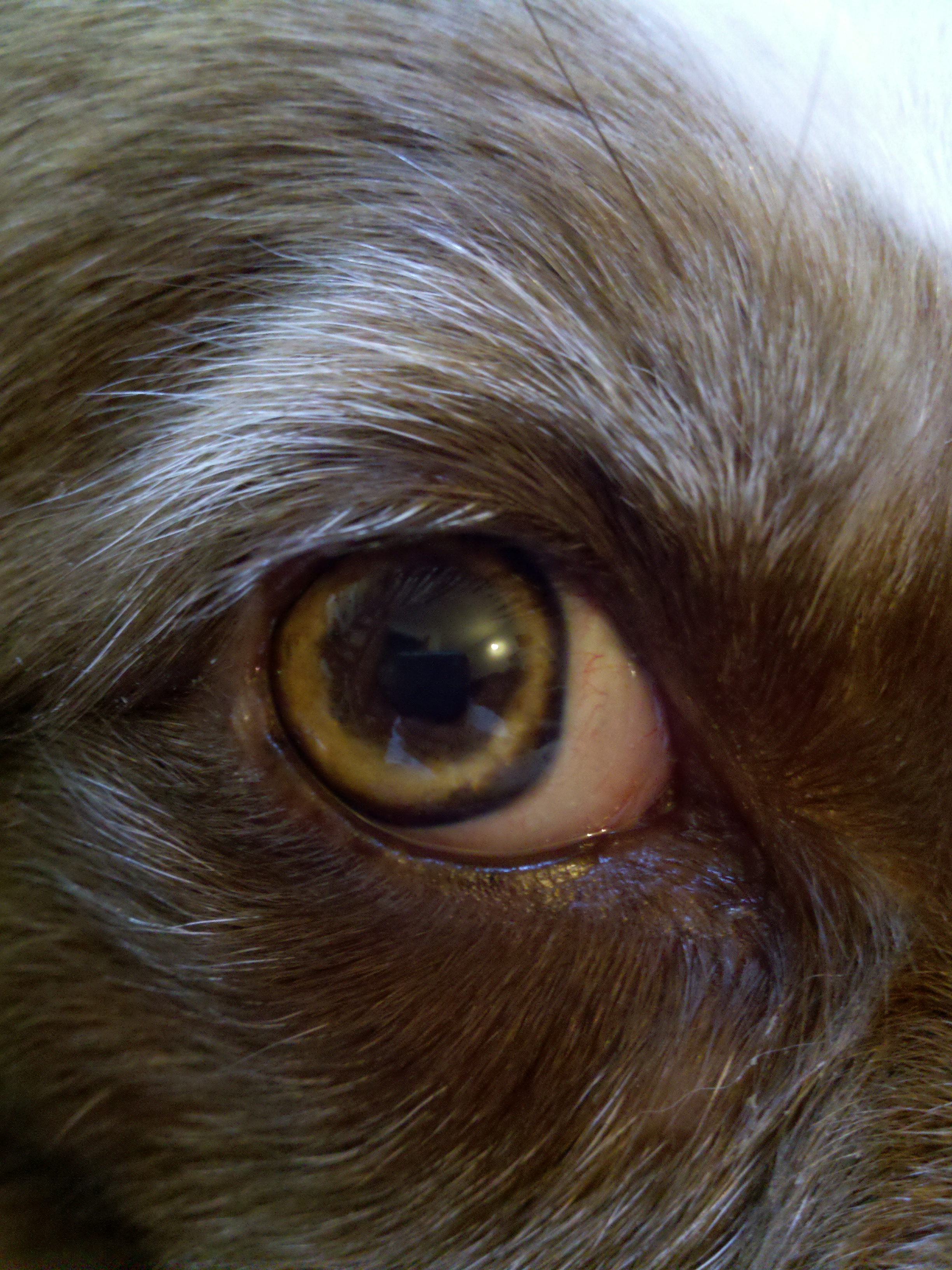 My Dogs Eye Pupil Is Red