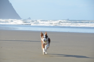 Running free on the beach