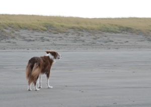 Looking off onto the beach and sniffing the wind